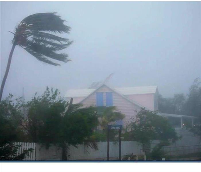 Strong winds and water pushing over a palm tree in the Bahamas